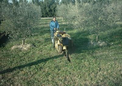 Tranchée-arrosage-oliviers
